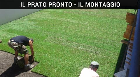 Prato pronto cose 39 cura manutenzione vantaggi e problemi for Prato erboso a rotoli