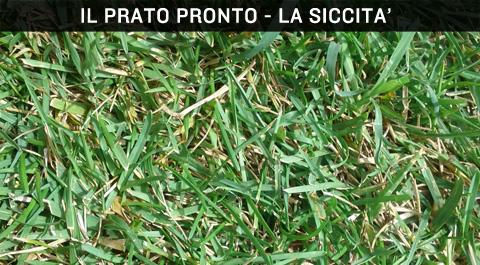 Prato pronto cose 39 cura manutenzione vantaggi e problemi for Prato pronto
